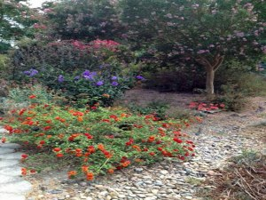 ruellia, lantana, petunia, crepe myrtle